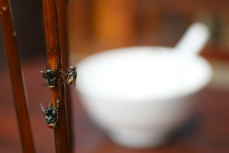 rid: Fly stuck on glue traps on the dining table. Stock Photo