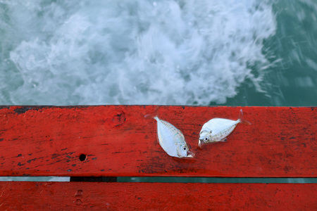 Dead fish on the stern of sailing boat in the sea.