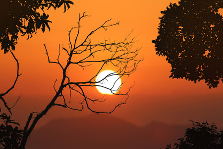 Leafless trees and red sky sunset background in the evening