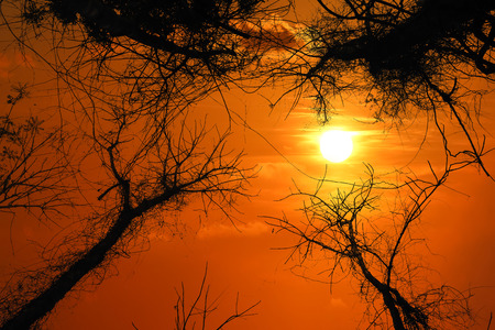 Silhouette of tree canopy with red sky sunset background.
