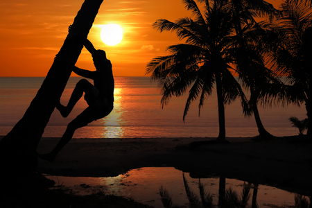 Asian man climbing the coconut trees to harvest in the morning, Red sky sunrise background.