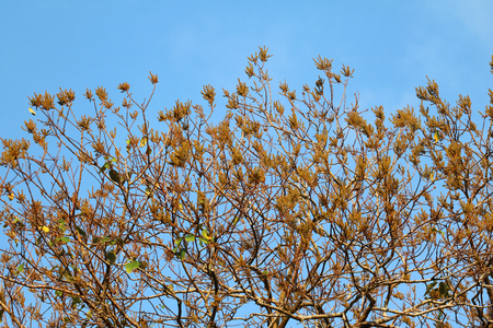 Flowers and seeds on the branches against the blue sky. Stock fotó