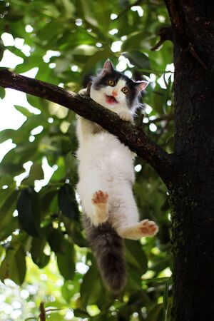 Beautiful little cat stuck in a tree in the garden Thailand.