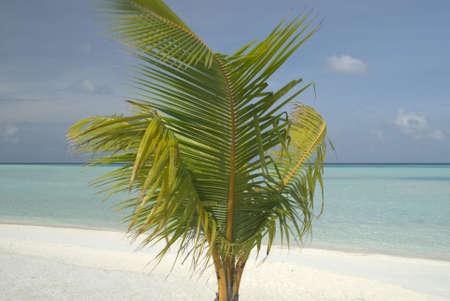 colour intensity: A tree planted into a beach on a Maldivian Lagoon