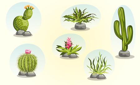 plantas del desierto: Colecci�n de cactus y plantas del desierto Vectores