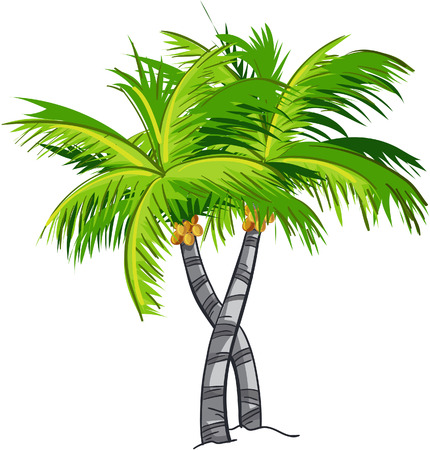 coconut water: Cartoon coconut tree