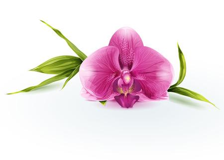 Illustratie van een roze orchidee Stock Illustratie