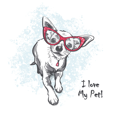 doggie: Funny puppy chihuahua wearing glasses. Contour cartoon illustration