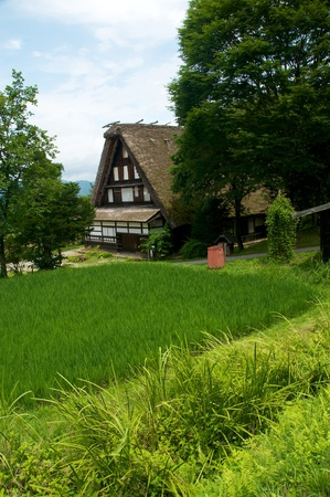Rustic view of rural Japan. Farmhouse with rice field in foreground. Stock Photo - 10408791