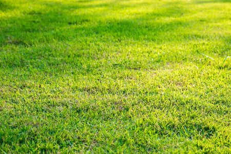 Green grass background, green lawn pattern textured background, top view.
