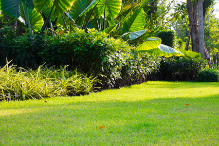 Shrubs and green lawns, front yard landscape, Peaceful Garden with a Freshly Lawn. Stock Photo