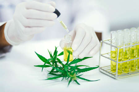 scientist in laboratory testing cbd oil extracted from a marijuana plant. Healthcare pharmacy from medical cannabis. Stock fotó
