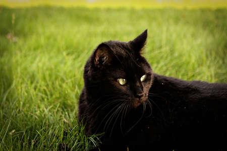 緑の草の上に座って黒い猫