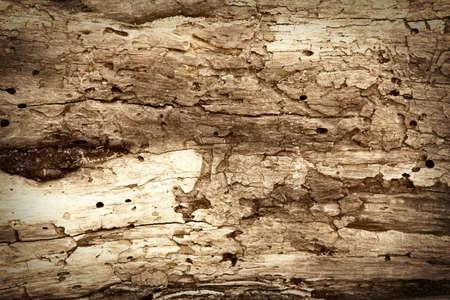 木の皮のクローズ アップ 写真素材