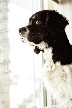 黒と白の犬の肖像画
