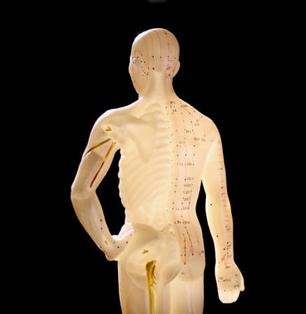 model of human body showing acupuncture points
