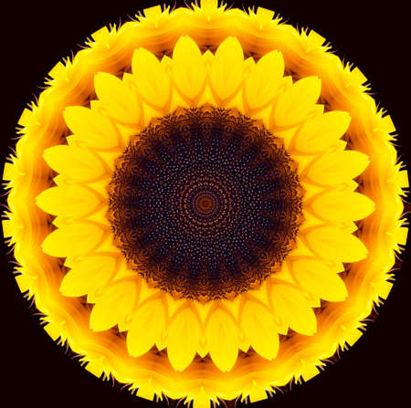 abstract illustration using sunflower elements and colors Imagens