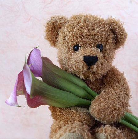 teddy bear holds a bunch of fresh pink calla lilies
