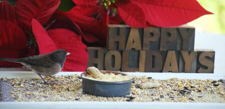 a songbird at a feeder with Happy Holidays and poinsettias behind Stock Photo - 5976850