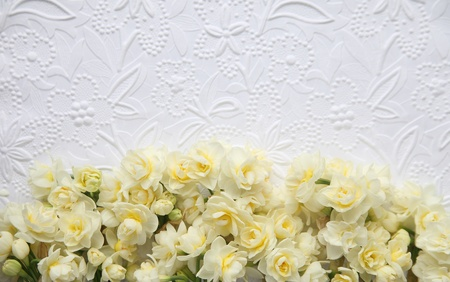 fresh spring narcissus flowers on lower portion of white embossed art paper background Stock Photo - 18000297