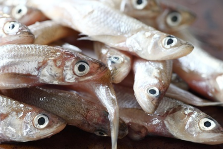 smelt: a pile of uncooked smelts close up