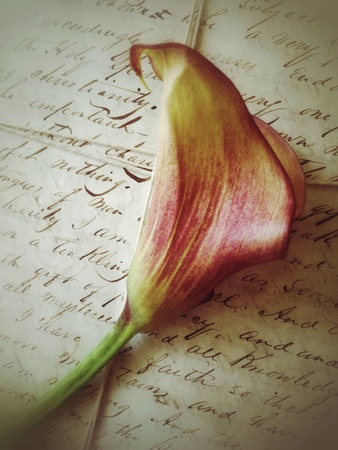 18th century: Calla lily on 18th century letters