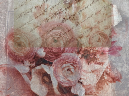 evocative: pink ranunculus flowers with old handwriting