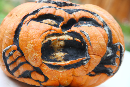black mold: A jack o lantern is attacked by a number of insects and black mold.