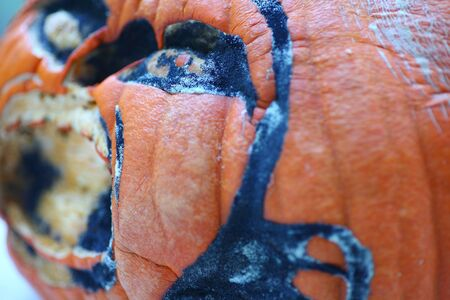 decomposing: A jack o lantern is molding a week after being carved.