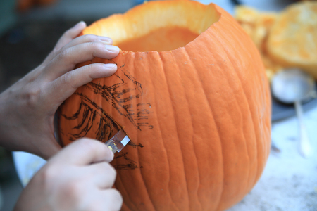 carvings: A man carves along the lines of his sketch on his jack o lantern. Stock Photo