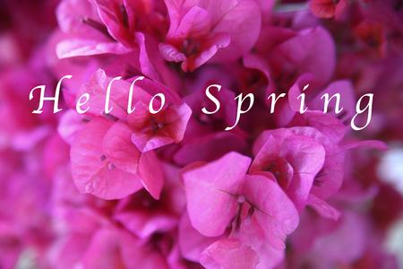 ホワイト タイプの単語こんにちは春暗いピンクのブーゲンビリアのクローズ アップ 写真素材
