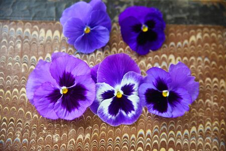 pansies: Five pansies in shades of blue and purple on marbled paper background