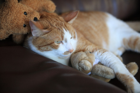 stuffed animals: Cat relaxes on a sofa with small generic teddy bears and copy space.