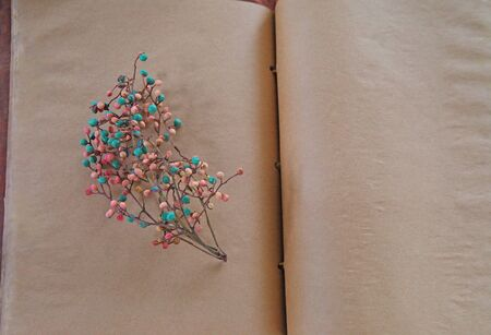 Blue and pink berries on vintage pages with copy space