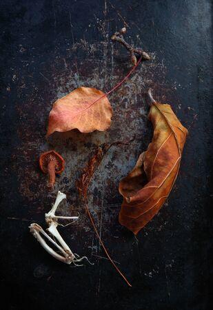 Autumn leaves, animal bones, mushroom and fern frond on textured metal surface