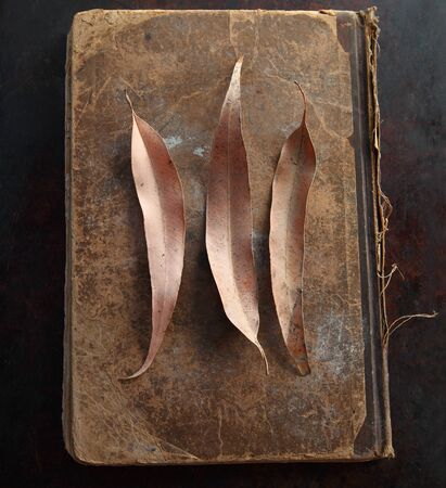 Three fallen leaves on a vintage book cover