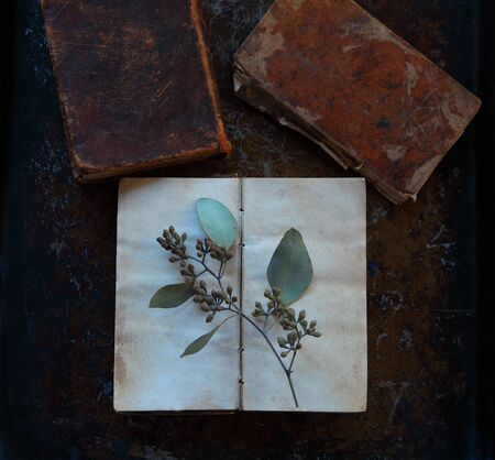 Eucalyptus leaves with seedpods on blank pages of a vintage book on a metal surface with room for text Banque d'images