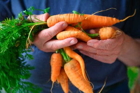 Older man with a bunch of organic carrots