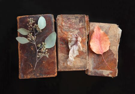 Old, damaged old books with eucalyptus and autumn leaves Banque d'images