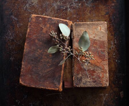Sprig of eucalyptus with seedpods on vintage books with room for text