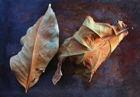 Dead leaves of magnolia and fiddle-leaf fig plants with copy space