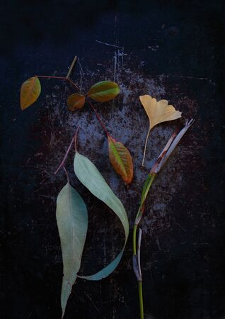 Eucalyptus, ginkgo and nankin leaves with fortnightly lily stalk