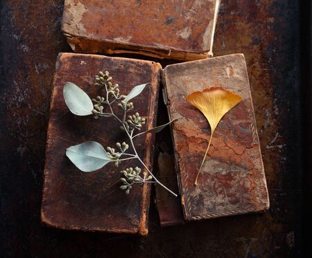 Eucalyptus leaves with seed pods and an autumn ginkgo leaf on top of damaged vintage books on a metal surface