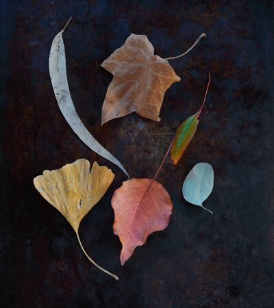 Arrangement of fall leaves including ginkgo, crabapple, ivy and eucalyptus with copy space