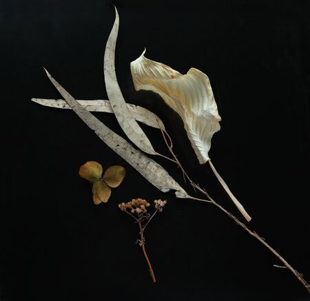 Hosta and eucalyptus leaves with dried flowers Banque d'images