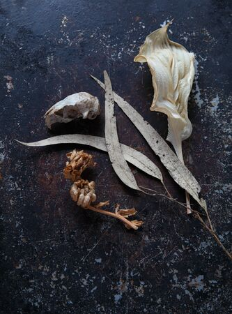 Overhead view of dead leaves, small animal skull and seed pods on a textured metal surface with copy space