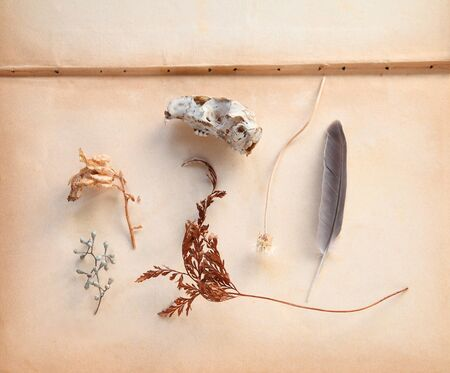 Arrangement of natural objects including a fern frond, seed pods, a feather and small animal skull on old book pages with text space