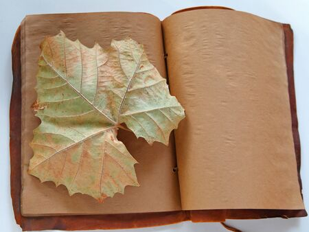 Large sycamore leaf in fall on browned pages of an old book