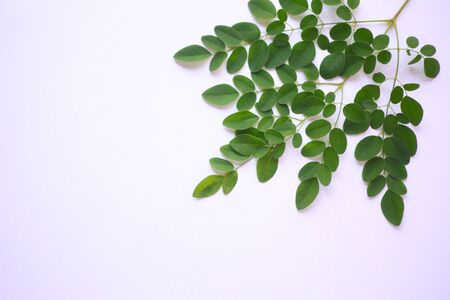 Small green leaves of an exotic plant with text space