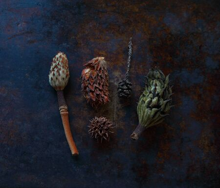 Magnolia seedpods, a redwood pine cone and a spiky sweet gum tree ball with text space